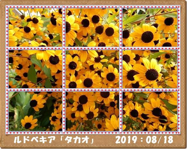 Photo_20190818133401